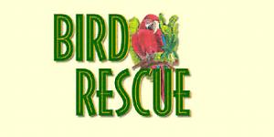 Family home Bird rescuer Perth Perth City Area Preview