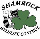 Wildlife / Animal removal and prevention