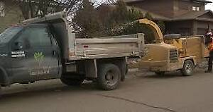 Small Tree Removal and stump,reliable,Insured $10,$20,$30