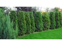 Scottish Gardening Services we offer a wide scale of landscaping, tree cutting garden clearances