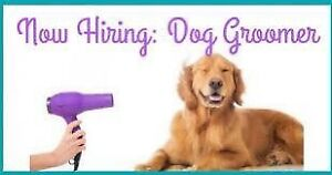 Looking for experienced Dog Groomer & Dog Bather