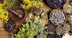Herbalism and the Art of Medicine Making Kitchener / Waterloo Kitchener Area image 1