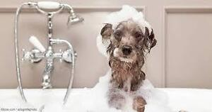 Doggy Bath and Blowdry Openings