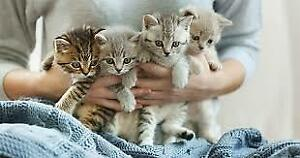 Puppy and Kitten Vaccines For Affordable Prices.647 781 7560 Pup