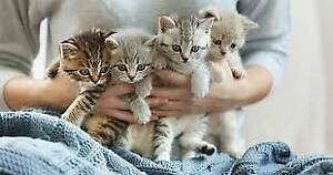♥Looking For Two Kittens To Expand Our Family♥