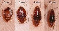 NH Pest control bed bugs treatment /call 647-609-8202/50% dis