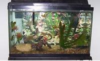 Aquarium, 30 gallon including stand ($185)