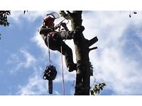 Tree Surgeons/Garden Clearance by BEST WAY