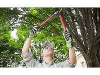 Gardener available in your area   Garden maintenance grass trimming hedge trimming