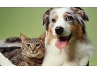Helens pet care - Cat sitter, Dog walker, dog boarding - West London.