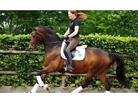 Horse Riding Lessons for adult beginners West Sussex.