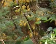 Pneus d'hiver hercules winter hsi-s 175/70/14 10% d'usure, clouté rims 4x114.3