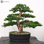 Looking for plant tree material in your garden