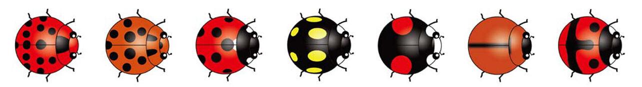 The Ladybug's Spot