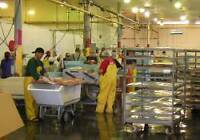 Full time Food processing plant workers needed - Chester Area