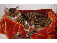 House sitter, cat sitting - NO CHARGE - london and surrounds, medium and long term bookings