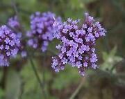 Flower Plug Plants