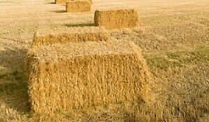 Certified Organic Oat Bales (small square)