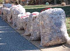 WANTED: YOUR BAGGED LEAVES