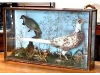 Victorian Display Case containing one Green Woodpecker and one Pheasant