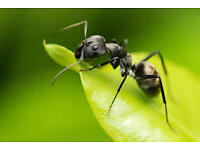 M60 Pest Control Solutions are a professional company offering a complete service