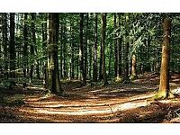 Forestry or Woodland wanted to rent in the Moy/Dungannon area
