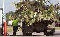 Junk Removal- branches, shrubs, and SOD removal. SameDayService
