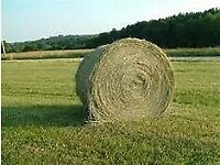 Top Quality Norfolk Meadow (Low Dust) Hay Bales