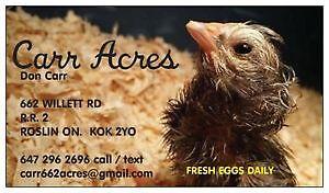 Duck eggs.... NEW Farm Fresh bread Belleville Belleville Area image 2