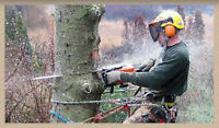 Arborist available for tree and branch cutting.