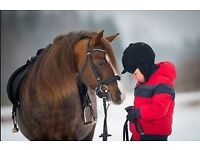 Full Time Nanny Required for Lovely Family (with horses) In Newmarket, Cambridgeshire