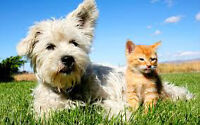 Looking to buy your pet care business