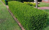 Harvest hills lawn care, Tree removal & hedge clean up