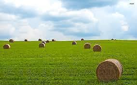 Rental Hay Land Wanted