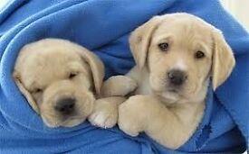 Guide Dogs For The Blind - Street Fundraiser - Manchester (OTE £14.70 per hour) (Immediate Start)