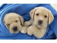 Guide Dogs for the Blind - Street Fundraiser - Edinburgh