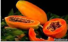 PLANTS FROM $5 NUT TREES FRUIT TREES CITRUS BERRIES STRAWBERRY Maida Vale Kalamunda Area Preview