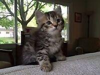 Gorgeous Sweet Kittens