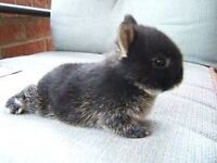 Most loving well trained bunny needs a home!