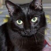 Rescued cat-Hunter Valley Cat Haven Kurri Kurri Cessnock Area Preview
