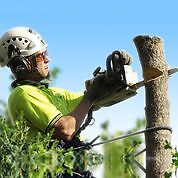 Tree Services (Quotes) - Save Up To 43% Wembley Cambridge Area Preview