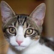 Rescued kitten-Hunter Valley Cat Haven Kurri Kurri Cessnock Area Preview