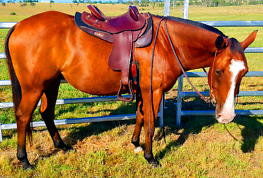 ALEXANDROS: QUIET TO DO ANYTHING WITH 14.3hh, CONFIDENCE BOOSTER Amberley Ipswich City Preview
