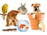 Help required with pets, rabbits, guinea pigs, birds, cat, fish, 27th July -2nd August.