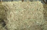 Hay - 2015 Square Bales SECOND CUT