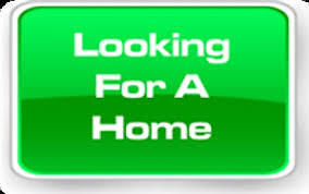 LOOKING FOR A HOME/SEMI-DETACHED IN NORTH END FOR FAMILY OF 3