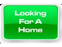 Wanted ASAP from PRIVATE LANDLORD 2/3 bedroom house Nottingham