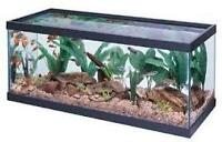 40 galon fish tank with no cover  $75