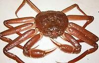AREA 23 SNOW CRAB ALLOCATION FOR SALE
