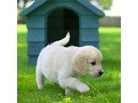 Guide Dogs For The Blind - Street Fundraiser - Nottingham (OTE £14.70 per hour) (Immediate Start)